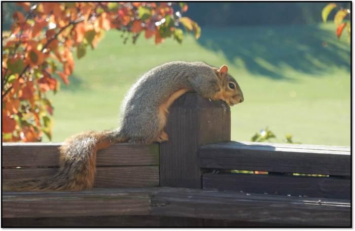Contemplative Squirrel