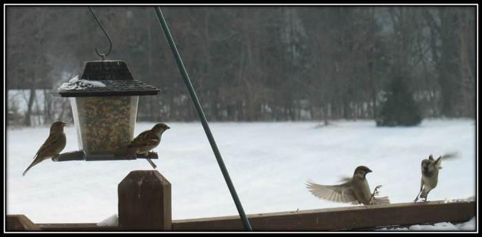 Sparrow crash 2