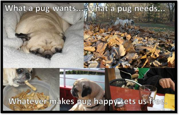 what a pug wants what a pug needs
