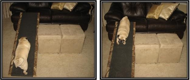 diy dog ramp 2