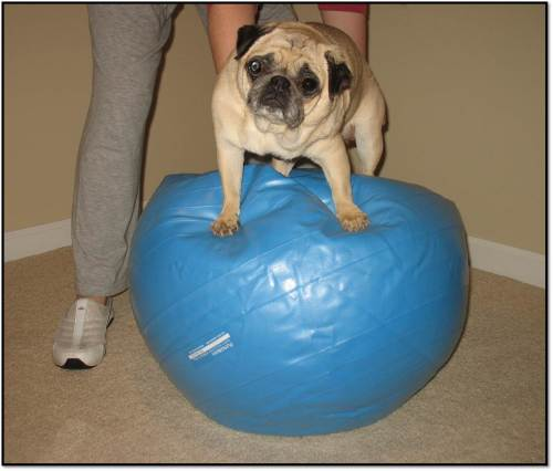 Peanut on the yoga ball