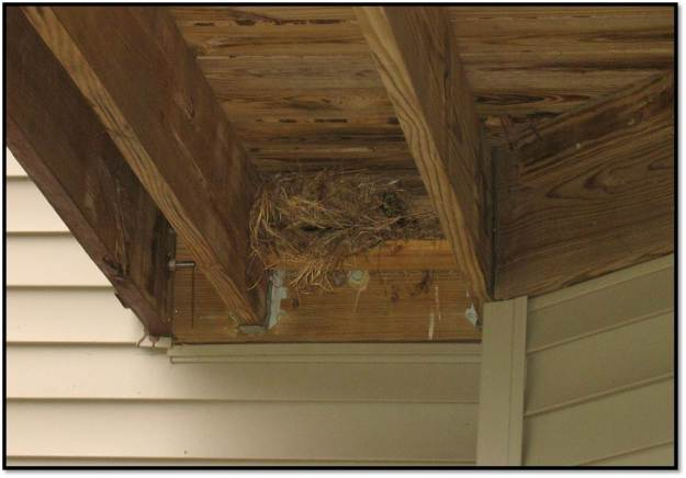 final nest build under deck 2014