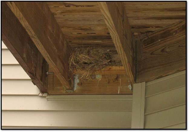 final nest build under deck 2014