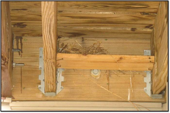 New Bird Nest Under Deck