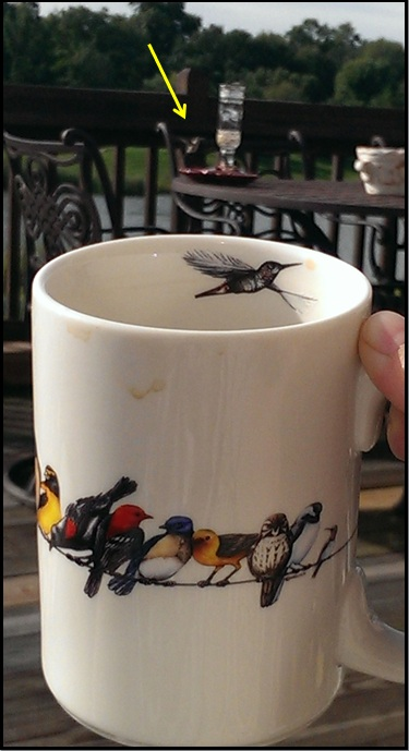 humming bird mug and humming bird 2