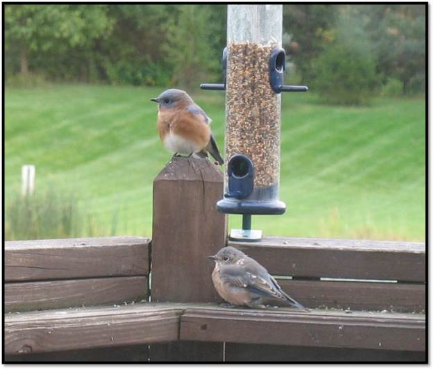 bluebirds oct 2014 6