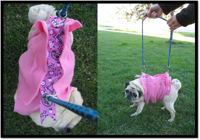 Dog coat made into harness with key chain rings front and side view