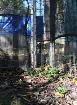 Lucy Outside of Cage with Wooka 2 Oct 2017