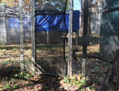 Lucy Outside of Cage with Wooka Oct 2017